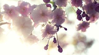 Sean Redmond – Blossom
